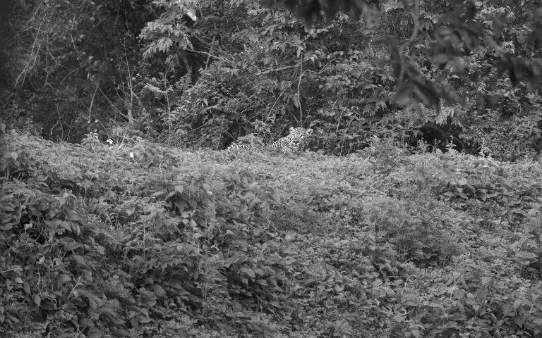 Leopard Scape - Kabini