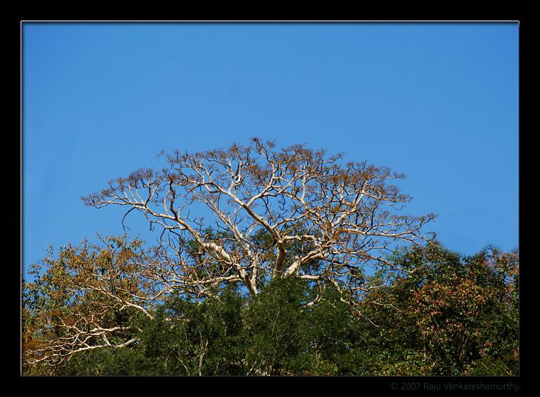 Devrayanadurga forest