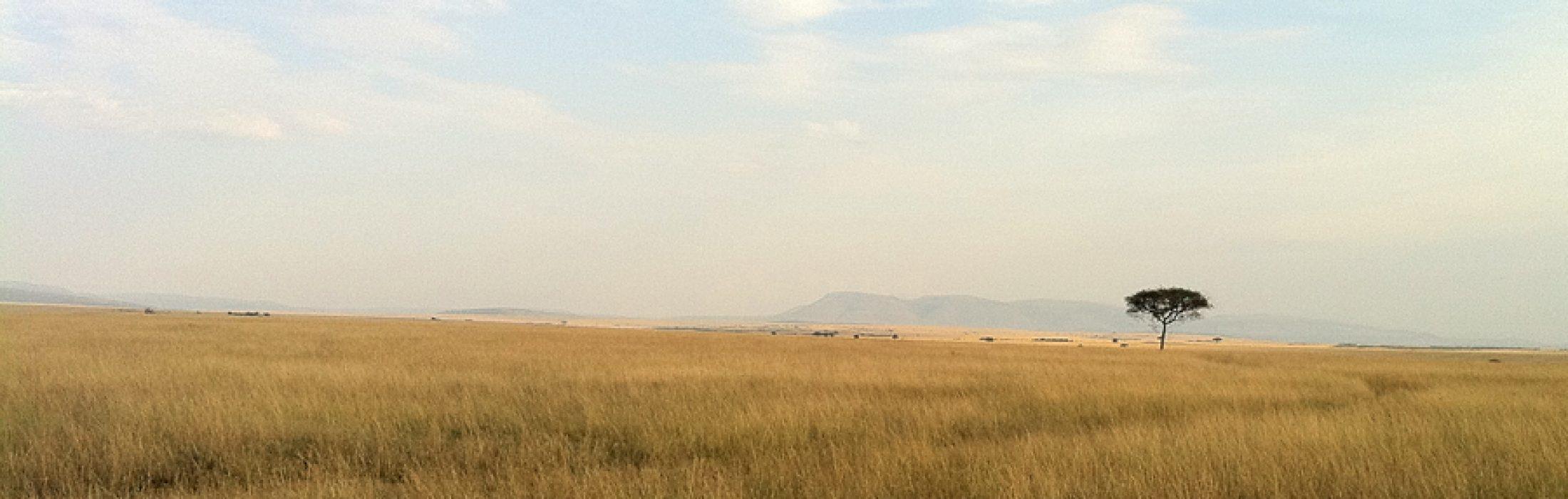 Grasslands of Masai Mara