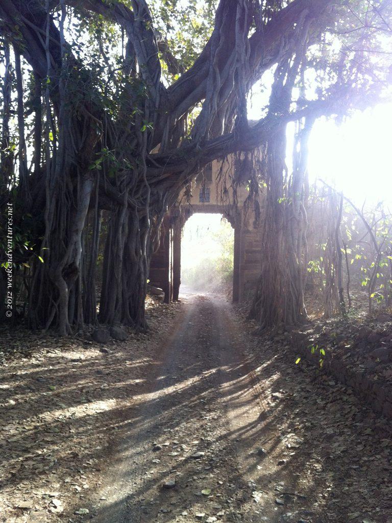 Fort in Ranthambhore